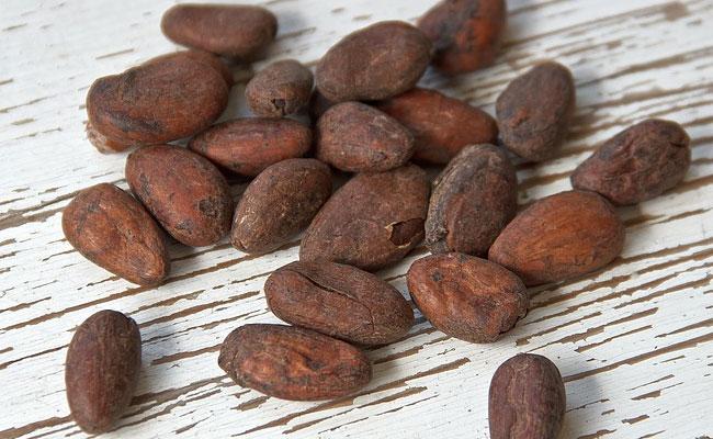 Cacao: migliorare la cognizione umana con i flavonoidi