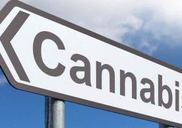 Cannabis light legale ecco gli Stati dove permessa