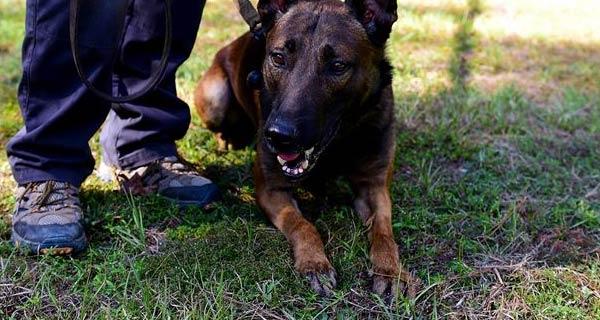 Rabbia usata saliva di un cane infetto per curare un bambino