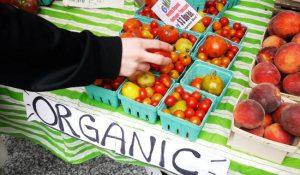 Alimenti biologici arriva la risposta impossibile riducano il rischio cancro