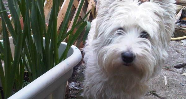 Cosa fare se il tuo cane ha mangiato mandorle