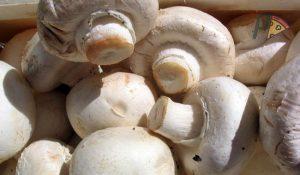 I funghi contengono antiossidanti ottimi contro invecchiamento e malattie