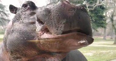 Gianluca Vacchi allevava un ippopotamo in giardino