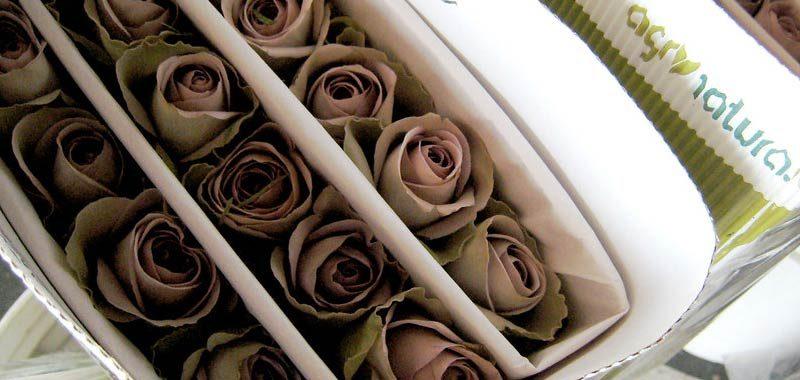Rose stabilizzate un regalo che va sempre piu di moda