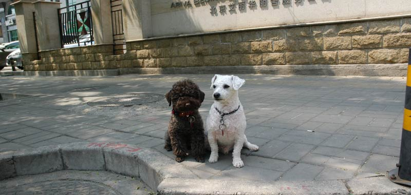 In Cina non si possono piu mangiare cani