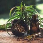Olio di CBD: ritrovato naturale per la cura di moltissimi disturbi